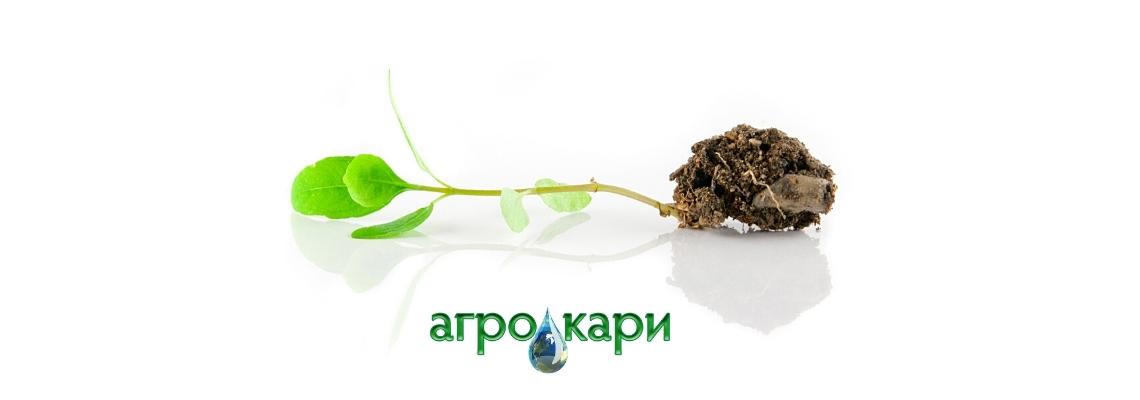 Сеитбата за отглеждане на зеленчуков разсад - предимства и особености