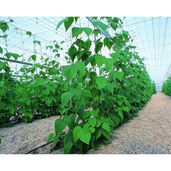 Мрежа за корнишони и пълзящи растения
