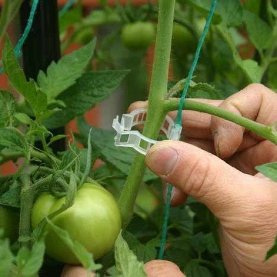 100 бр - Клипс -щипка  за поддържане на домати