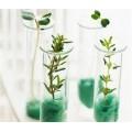 Размножаване и клониране на растения